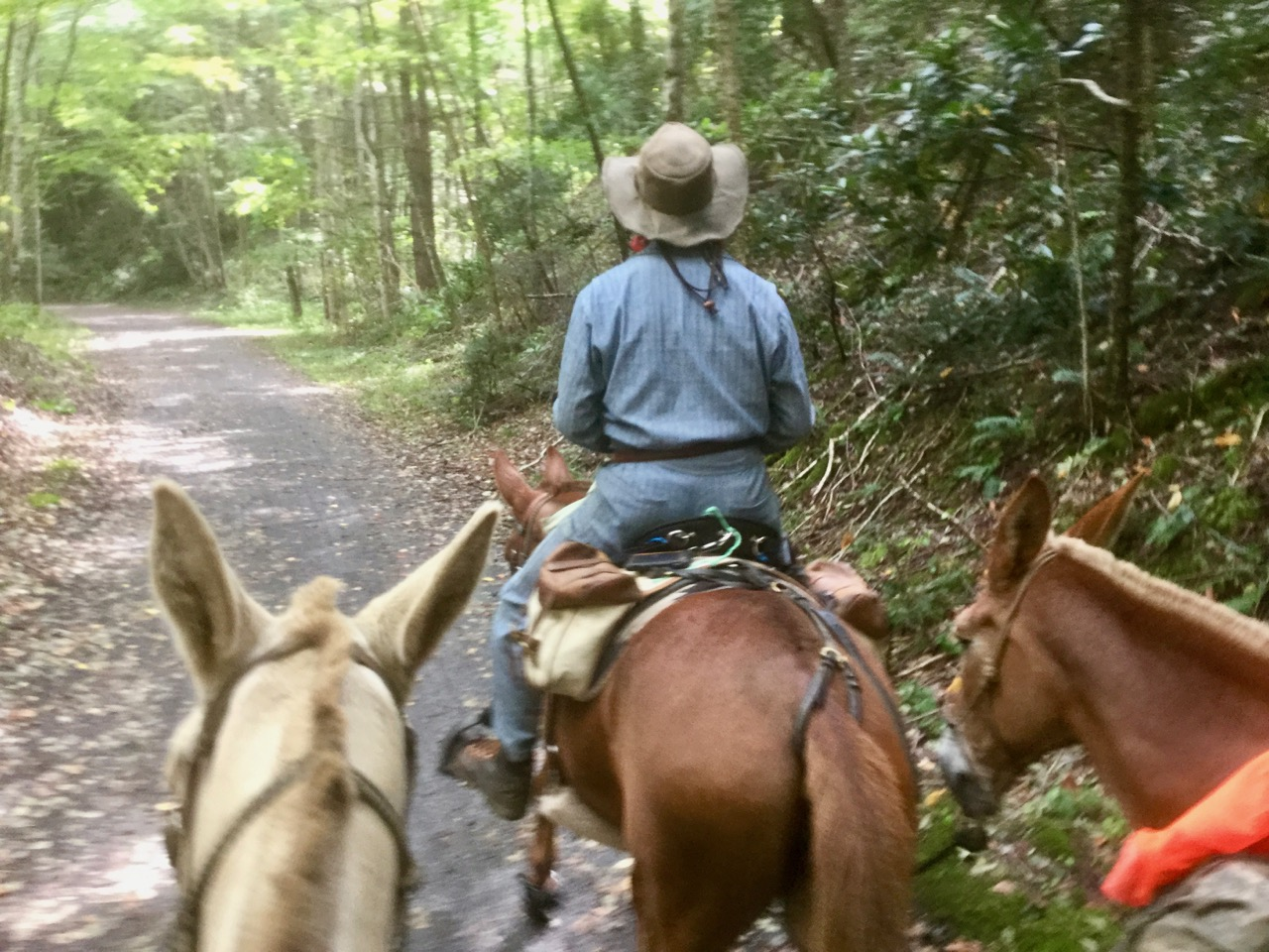 Bernie Harberts, Bernie Harberts photo, Julie Carpenter, ride out the front gate, riverearth.com, mule, horse, trail ride, western North Carolina, packing, adventure, voyage, horse voyage, mule voyage, barefoot hoof trim, pack mule