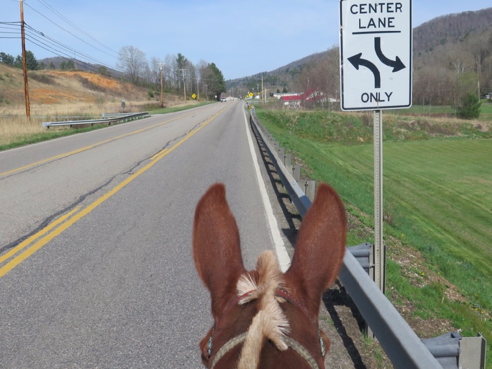Bernie Harberts, mule, road, sign