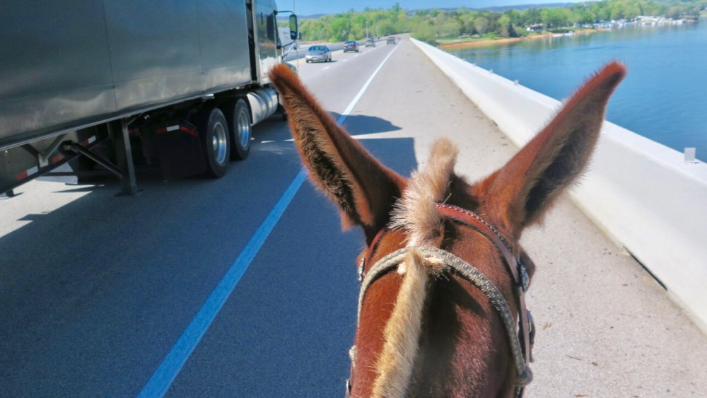 Bernie Harberts, mule, tractor trailer, bridge, semi