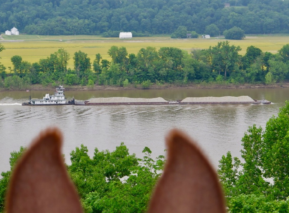 Bernie Harberts, mule, trail ride, ohio river, barge