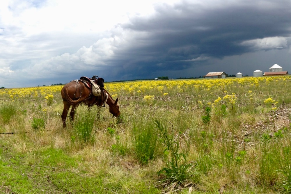 Bernie Harberts, mule, trail ride, storm cloud, rain, hail, prairie