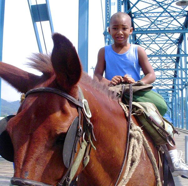 woody mule cross bridge young rider