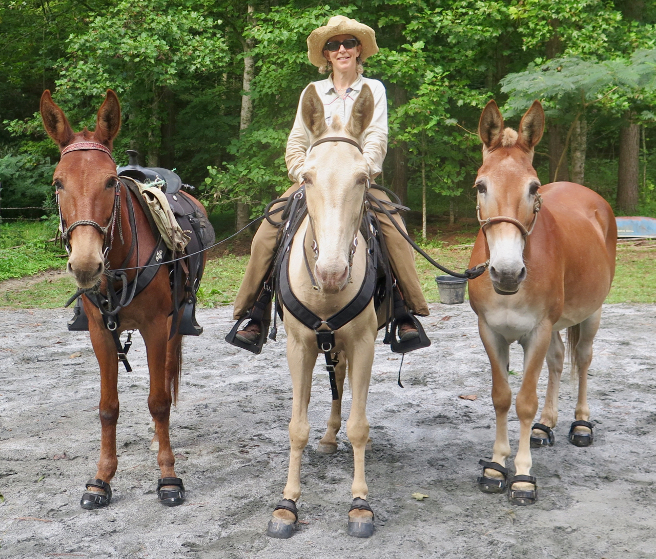 bernie harberts riverearth.com horse mule trailride long distance riding ride out the front gate lost sea expedition
